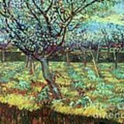 Apricot Trees In Blossom Poster by Pg Reproductions