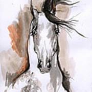 Arabian Horse Ink Drawing 2 Poster