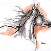 Arabian Horse Ink Drawing 3 Poster