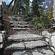 Arboretum Stairway Poster by Tim Allen