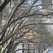 Arched Trees Poster