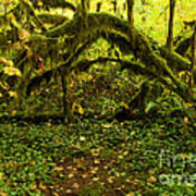 Arches In The Rainforest Poster