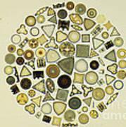 Arrangement Of Diatoms Poster