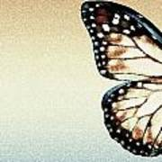 Artistic Butterfly Poster