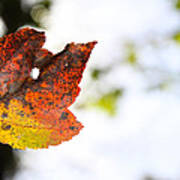 Artsy-fartsy Autumn I Poster