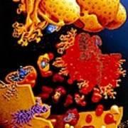 Artwork Of Er, Golgi Body, Plasma Membrane Of Cell Poster