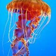 Ascending Jellyfish Poster