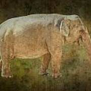 Asian Elephant Poster
