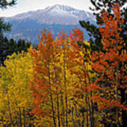 Aspen Grove And Pikes Peak Poster