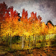 Aspen Grove In Autumn Poster