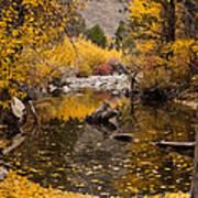 Aspen Leaves On Stream Poster
