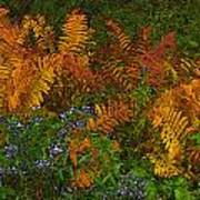 Asters And Ferns Poster