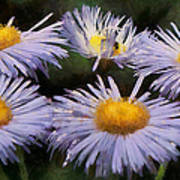Asters Painterly Poster by Ernie Echols