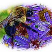 Asters With Dew And Bumblebee Poster