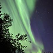 Aurora Borealis Above The Trees Poster