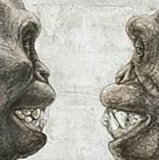 Australopithecus And Chimpanzee Teeth Poster
