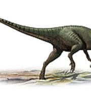 Australovenator Wintonensis Poster