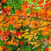 Autumn Abstract Painterly Poster