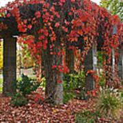 Autumn Arbor In Grants Pass Park Poster