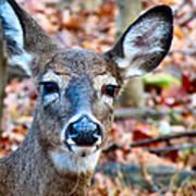 Autumn Buck Poster