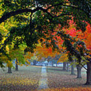 Autumn Canopy Poster
