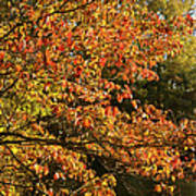 Autumn Colors In Pa Poster