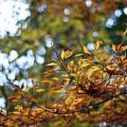 Autumn Crescendo Poster