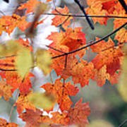 Autumn Day Dream Poster