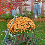 Autumn Display I Poster