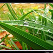 Autumn Drops Poster