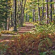 Autumn Ferns Poster