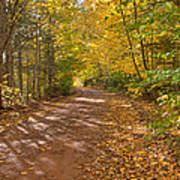 Autumn Foliage On A Country Road Poster