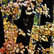 Autumn Forest  Poster