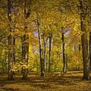 Autumn Forest Scene In West Michigan No.1140 Poster