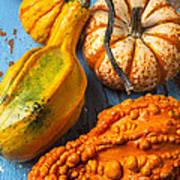 Autumn Gourds Still Life Poster