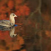 Autumn Gull Poster