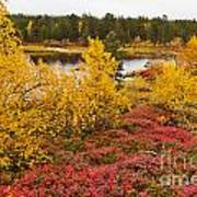 Autumn In Inari Poster