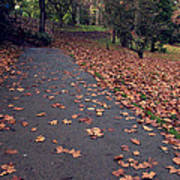 Autumn In St Fagans Park Cardiff Poster