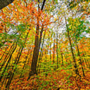 Autumn In The Hocking Hills Poster