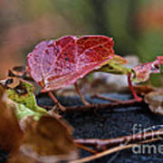 Autumn Ivy In Red Poster