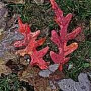 Autumn Leaf Art IIi Poster