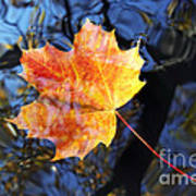 Autumn Leaf On The Water Level Poster