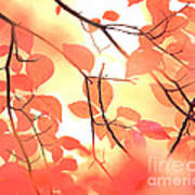 Autumn Leaves Ablaze With Color Poster