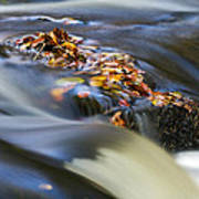 Autumn Leaves In Water Poster