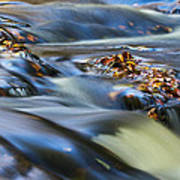 Autumn Leaves In Water IIi Poster