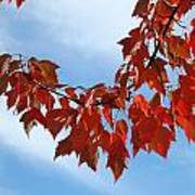 Autumn Leaves Tree Red Orange Art Prints Blue Sky White Clouds Poster