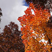 Autumn Looking Up Poster