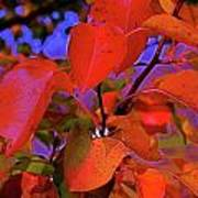 Autumn Magic 1 Poster