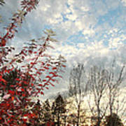 Autumn Maple And Sky Poster