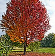 Autumn Maple Emphasized Poster
